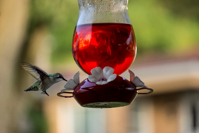 My Hummingbird